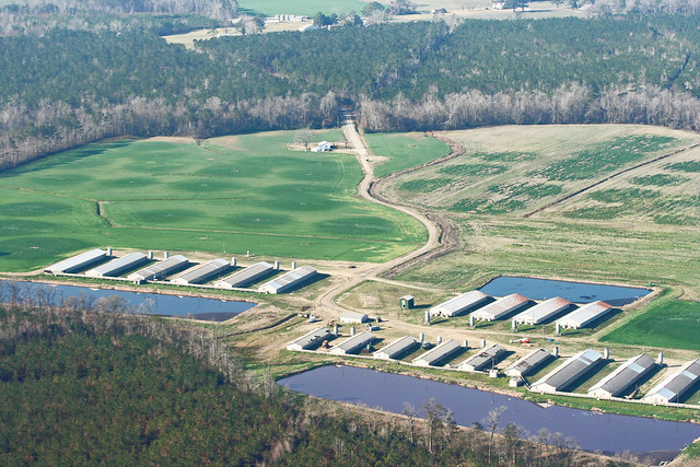 Lawsuits Against North Carolina Hog Farms Could Help Reform State�s CAFO Industry
